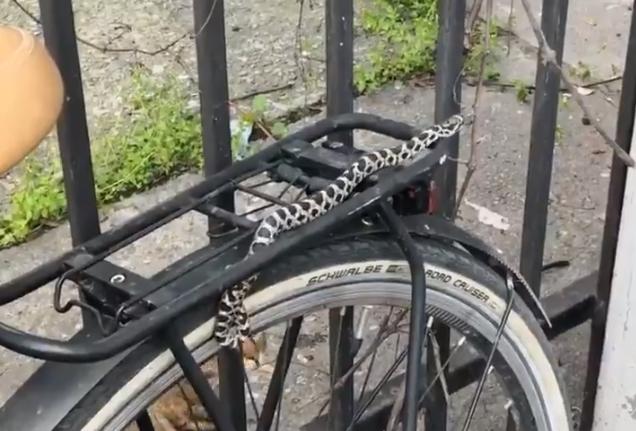 ВИДЕО: Змија се замота околу велосипед во центарот на Скопје